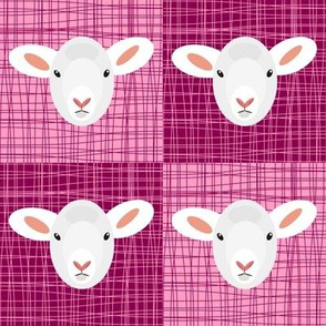 Pink Pop Lammy