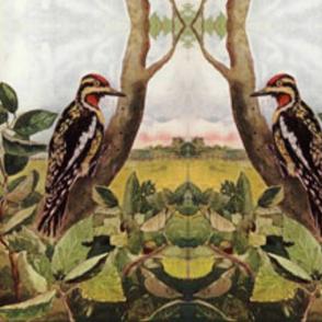 woodpecker-painting-ed