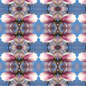 Magnolia Blossoms 6434