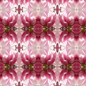 Magnolia_4060