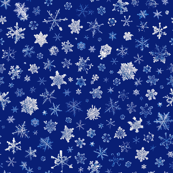 photographic snowflakes on blue