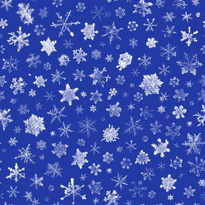 photographic snowflakes on morning blue