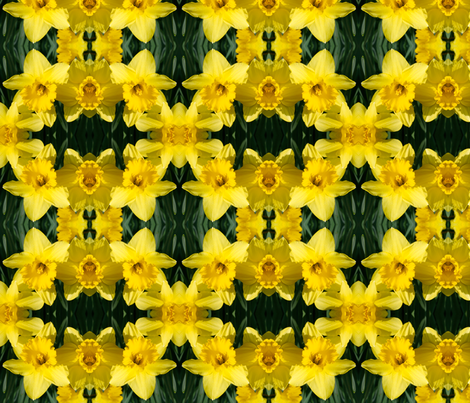 Daffodils_1832 fabric by falcon11 on Spoonflower - custom fabric