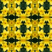 Rdaffodils_1832_8x8_shop_thumb