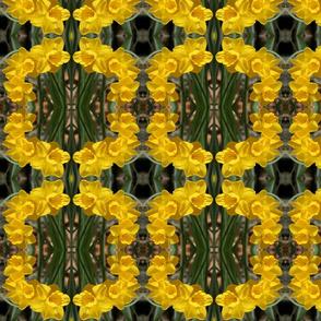 Daffodils_6465