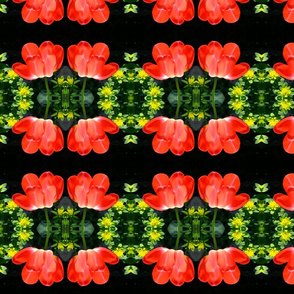Red Tulips_2150