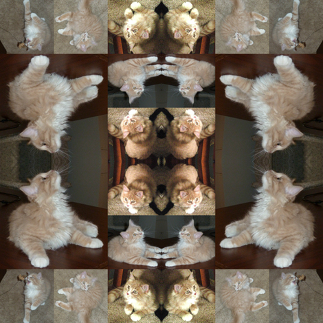 Pumpkin fabric by ravynscache on Spoonflower - custom fabric