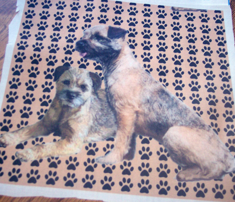Rborder_terriers_comment_285280_preview