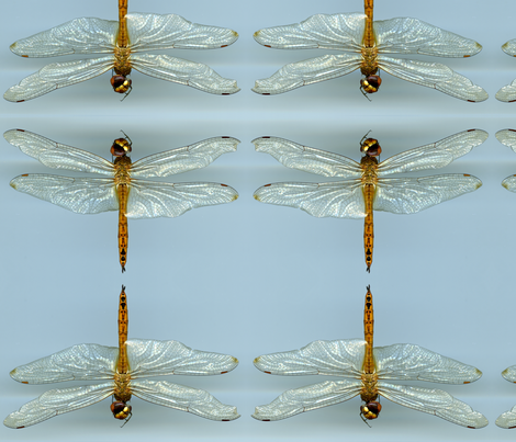 Dragonfly  fabric by ninka on Spoonflower - custom fabric