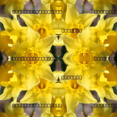 Daffodils_5673