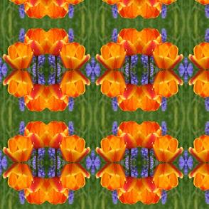 Tulips_6380