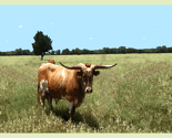Hl_longhorn_bull_watercolor_thumb