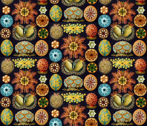 Ernst Haeckel Illustrations fabric by elizabethdoyle on Spoonflower - custom fabric