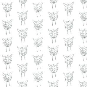 Alpacaluv