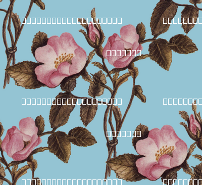 Charlotte Bronte's Wild Roses on Blue