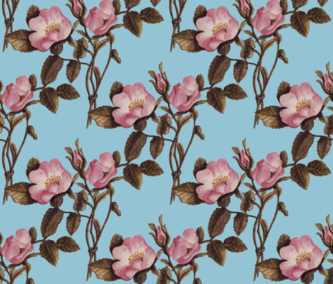 Charlotte Bronte's Wild Roses on Blue fabric by peacoquettedesigns on Spoonflower - custom fabric