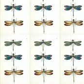 Dragonfly_shop_thumb