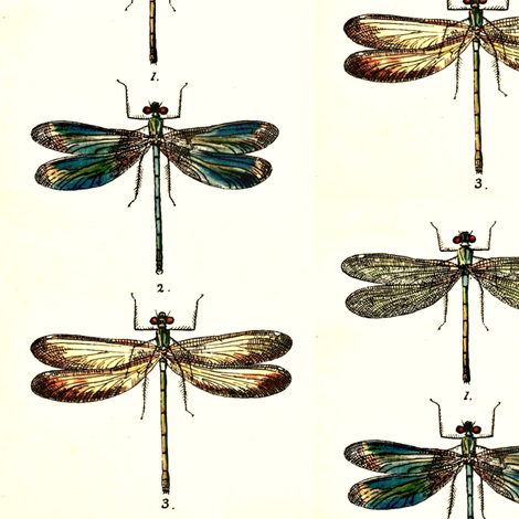 Vintage Lithograph Dragonflies Circa 1845 fabric by raxor on Spoonflower - custom fabric