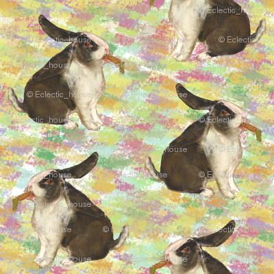 DutchLop Bunny 2
