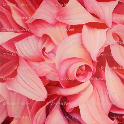 Mixed Pink Dahlias