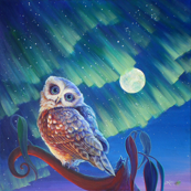 Aurora Owl