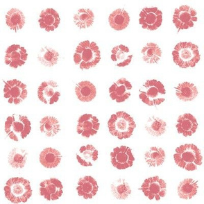 daisy polkadots in peach-pink