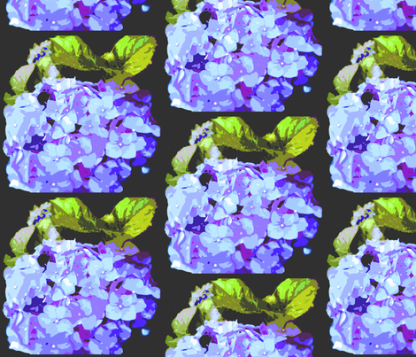 Large Print Blue Hydrangea Flowers on Black Background