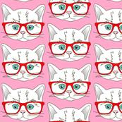Kitten Hi...
