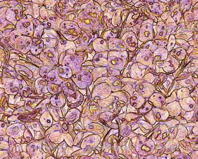 """""""Hydrangea Peach Lilac"""""""