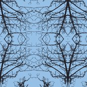 Rrrbranches_almost_blue_sky_ed_shop_thumb