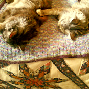 Of Cats and Quilts:Sisters