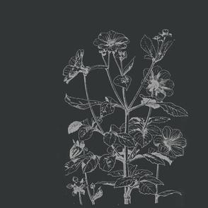 studies_plant_form_2