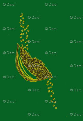 Seeds pine   citron
