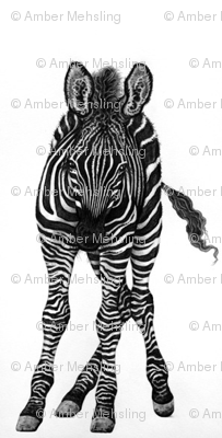 elegant zebra