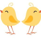Loria Chicks