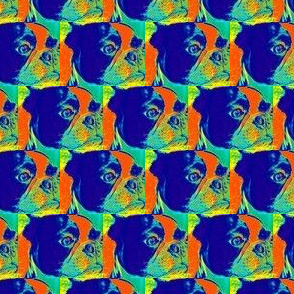 Boston Terrier Thermal