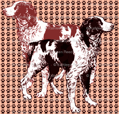 brittany_spaniels_on_pawprints