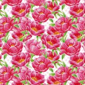 Rrrrrrrrrrrrrpeonies-def_shop_thumb