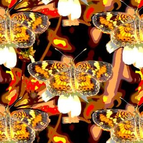 Phaon Crescent Butterfly