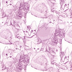 Kittens in Pink