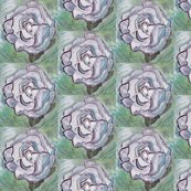 Rwhite_rose_original_shop_thumb