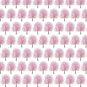 full_cherryblossom_tree