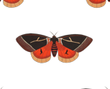 Moth_002_thumb