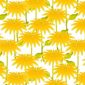 YELLOW FLOWER on White
