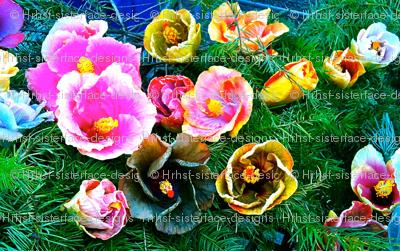 Rare Hawaiian Hibiscus