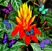 Starburst Flower & Butterflies