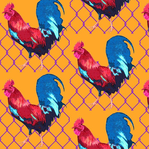 Rooster_Pop