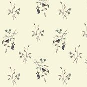Rrrrrfinches_on_cream_shop_thumb