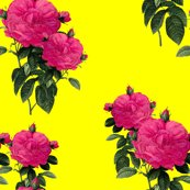 Rredoute_rose___hot_pink_and_la__yellow___romp_in_the_garden_shop_thumb