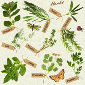 herbs and butterflies